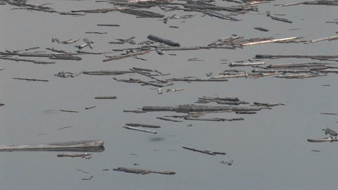 Splinters of wood float on still water at Mt. St.  Footage