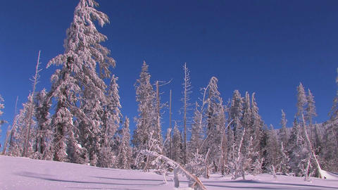A snowscape with winter trees covered in snow Stock Video Footage