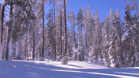 Pan across a beautiful snowscape in winter Footage