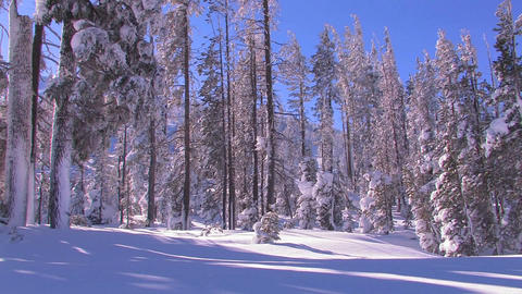 Pan across a beautiful snowscape in winter Stock Video Footage