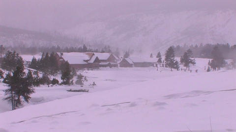 Yellowstone Lodge is in the distance of this dead Stock Video Footage