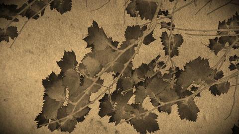 Vine Leaves Animation