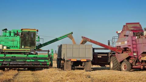Harvesters unloads grain into truck Stock Video Footage