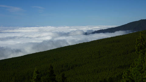 Forest on mountain slope Stock Video Footage