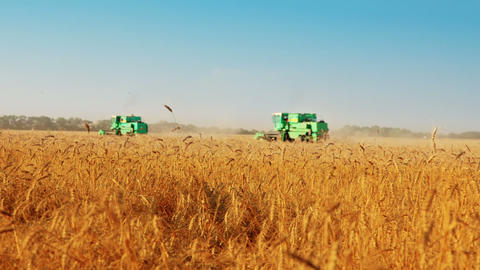 Harvest time Stock Video Footage