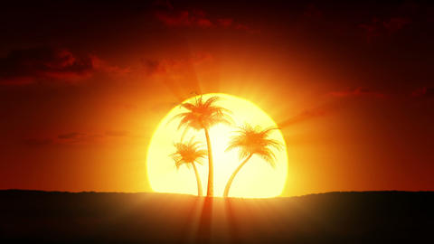 Growing palm trees at sunrise Stock Video Footage