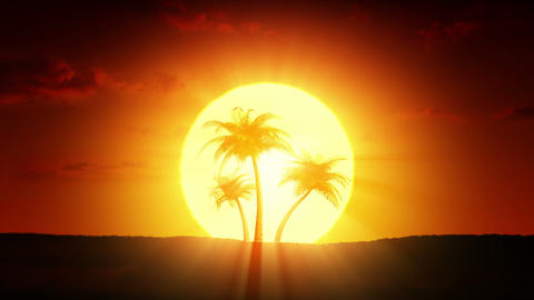 Growing palm trees at sunrise Animation