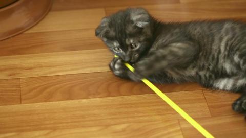 Playful kitten Stock Video Footage