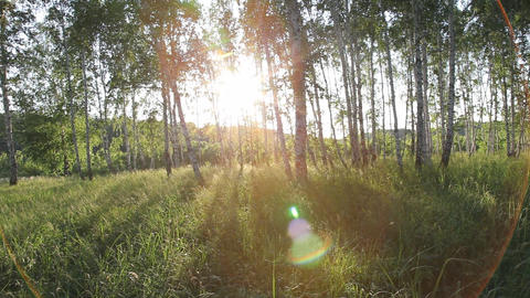 Soaring through a forest at sunset Stock Video Footage