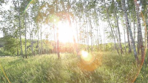 nature Footage