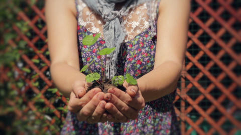 Baby Plant. A New Life Stock Video Footage