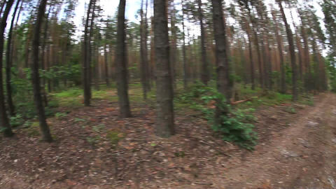 Running POV in the forest, wide angle Stock Video Footage