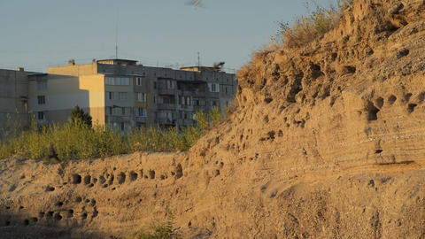The nests of swallows in a sand quarry Stock Video Footage