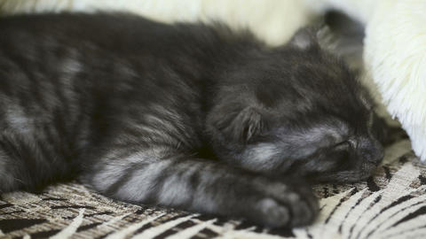 Sleeping kitten Stock Video Footage