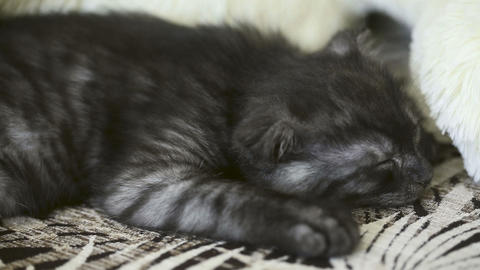 Sleeping kitten Stock Video Footage