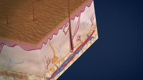 Anatomy of the Skin Stock Video Footage