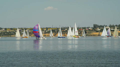 Great sailing regatta Stock Video Footage