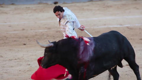 Work bullfighter with bull. Close-up Stock Video Footage