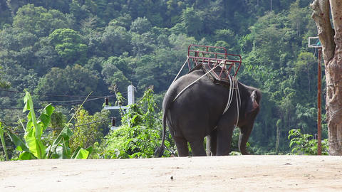 Thai taxi Footage