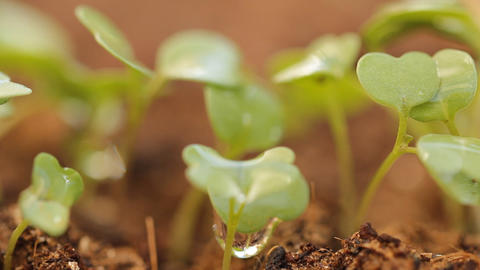 Germination herb growing soil garden life plant ea Stock Video Footage