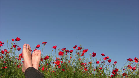 Carefree man on poppy field Stock Video Footage