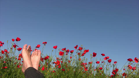 Carefree man on poppy field Footage