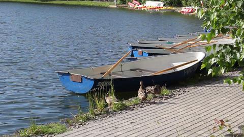 Ducks near the boat 1 Footage