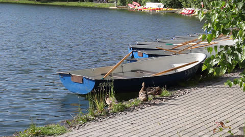 Ducks near the boat 1 Stock Video Footage