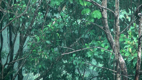heavy rainfall in rain forest Stock Video Footage