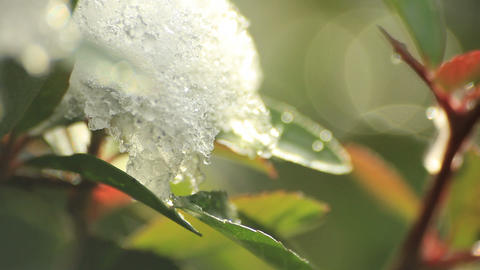 Melting snow on leaves Stock Video Footage