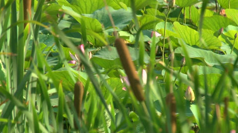 Reeds and grass Stock Video Footage