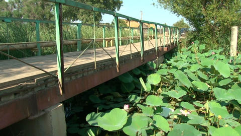 Wooden bridge and pond with lilies Stock Video Footage