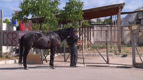 A man with a horse unlocks the gate Footage