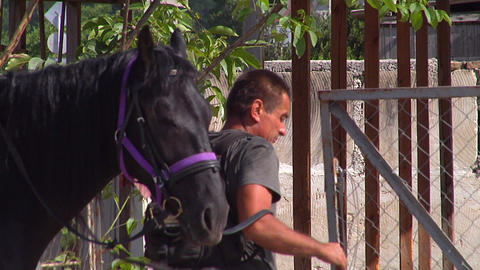 A man with a horse unlocks the gate Stock Video Footage