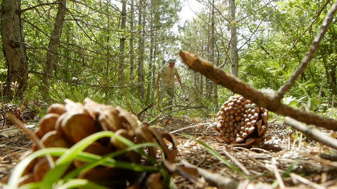 A man walks through the woods Stock Video Footage