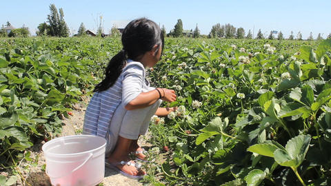 Little Girl Searches For Strawberries Stock Video Footage