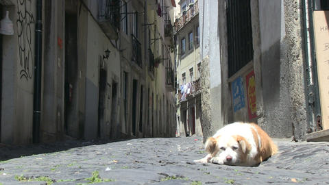 Street dog Stock Video Footage