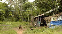 A Run-Down House in Rural Thailand Stock Video Footage