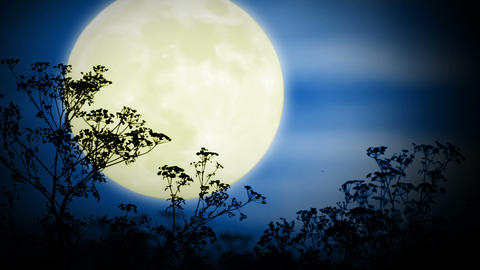 Big moon and grass Stock Video Footage