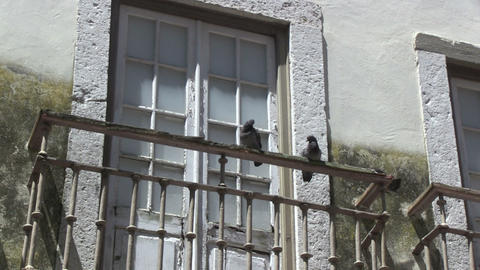 Pigeons on balcony Stock Video Footage