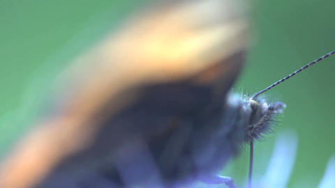 butterfly Extreme close up Stock Video Footage