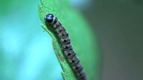 caterpillar in slow motion Stock Video Footage