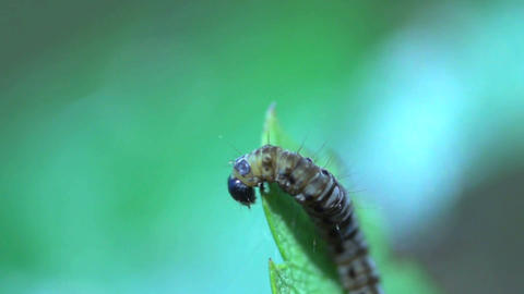 caterpillar extreme close up Stock Video Footage