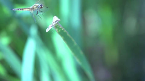 Dragonfly In Slow Motio stock footage