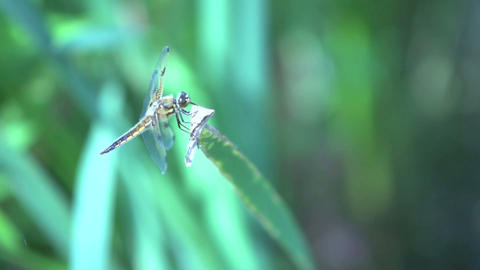 dragonfly in slow motio Stock Video Footage