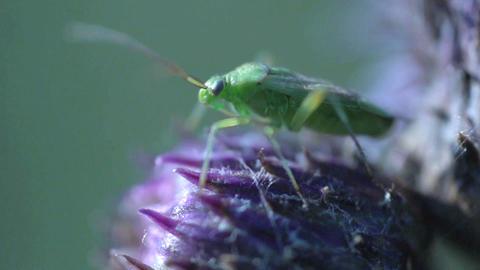Little bug Stock Video Footage