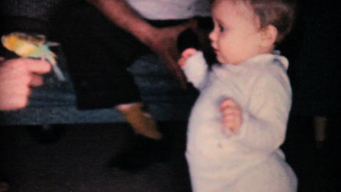 Baby Girl With Family Budgie 1962 Vintage 8mm film Stock Video Footage