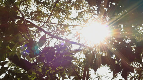 Sun through leaves Stock Video Footage