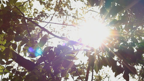 Sun through leaves Footage