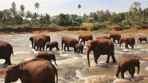 Elephants River Stock Video Footage